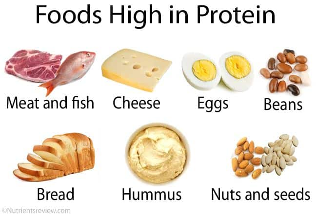 what are foods high in protein? Should I drink a protein shake after running? We tackle these questions in our recent blog post.