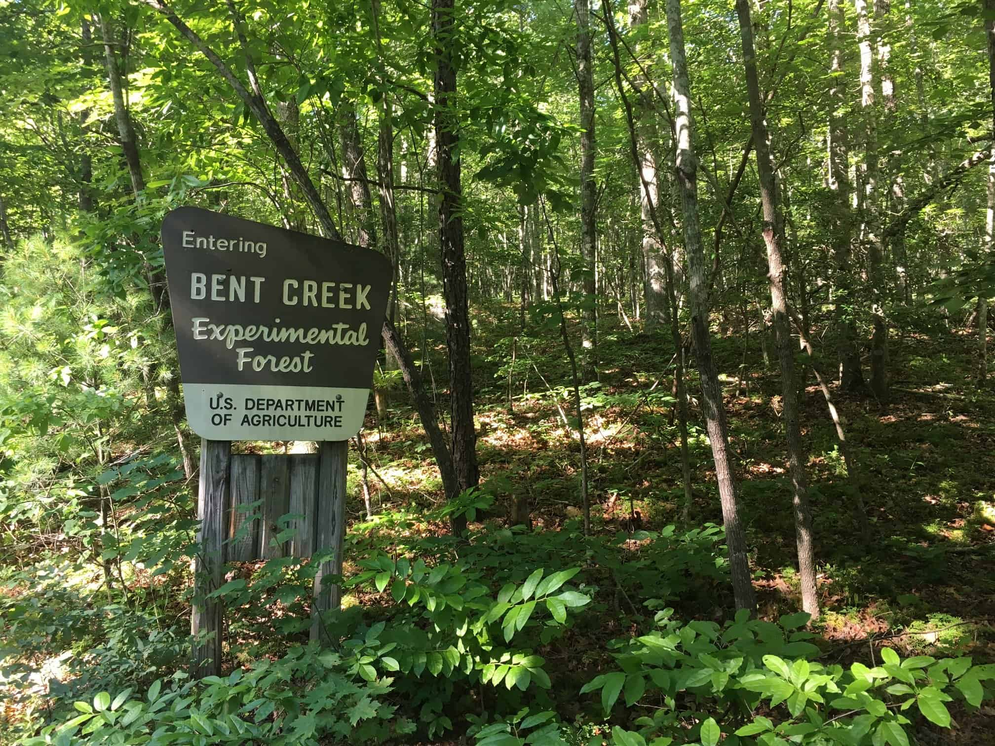 Bent Creek Experimental Forest Asheville